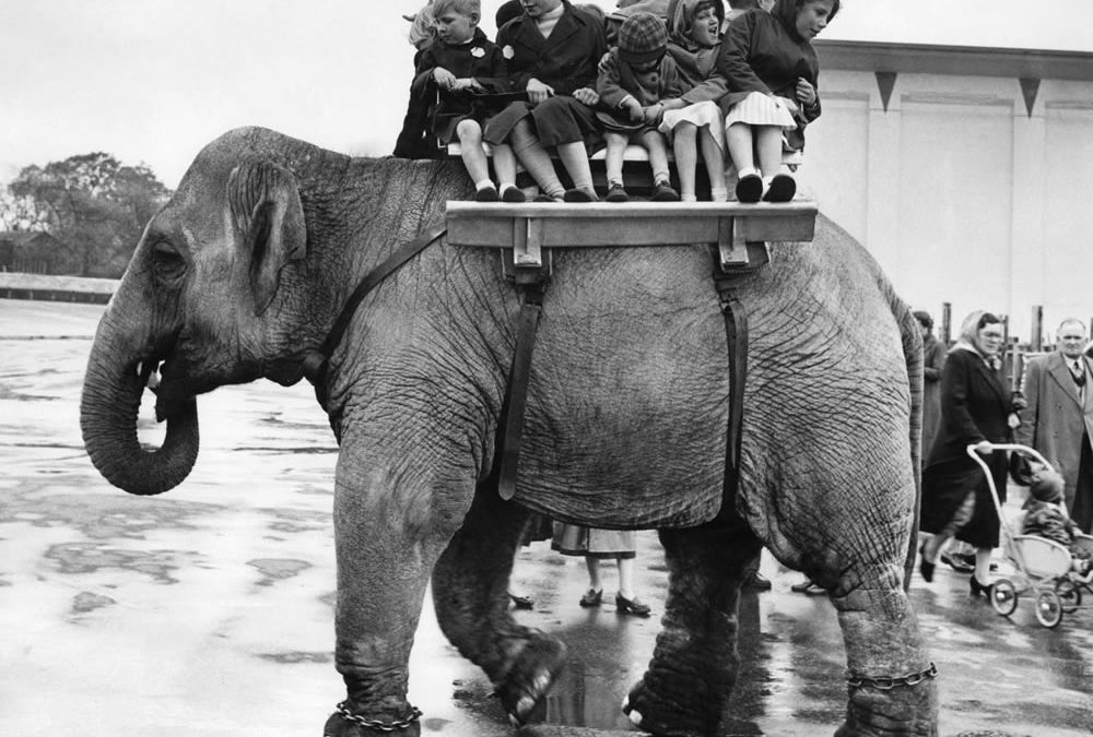 Bits & Pieces – Elephant rides at Belle Vue Zoo