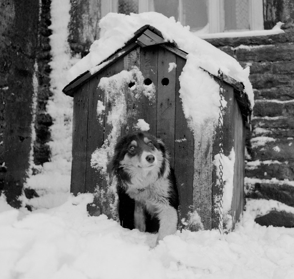 It's a dog's life when your kennel freezes! Winter on a farm near Manchester, January 1964