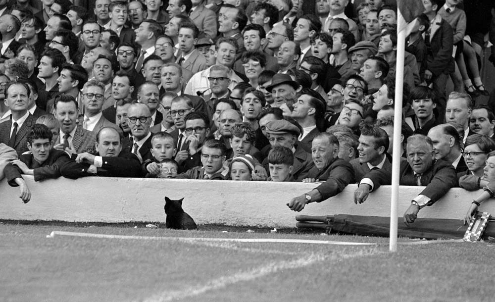 A cat invades the pitch during the first ever Match of the Day filmed at Anfield, August 1964