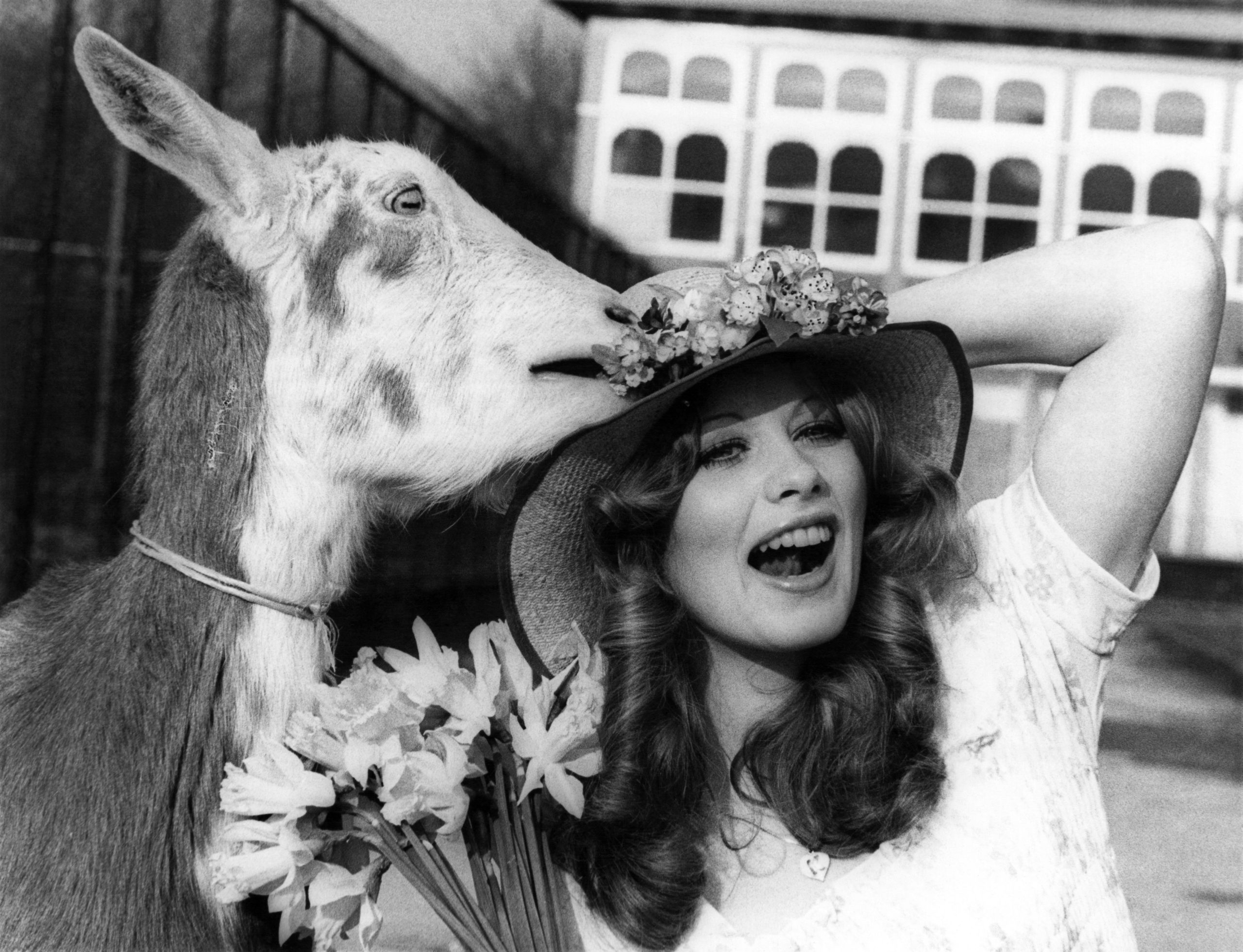1975: Look back at Belle Vue Zoo with Fred the goat