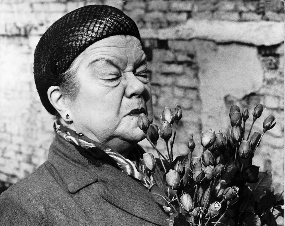 Violet Carson as Ena Sharples with the rose named after her